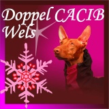 SOFA Dog Wear - Doppel CACIB Wels 2014