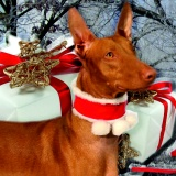 SOFA Dog Wear - X-mas events 2016