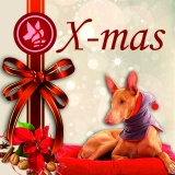 SOFA Dog Wear - X-mas events