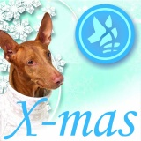SOFA Dog Wear - X-mas run