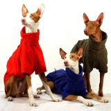 SOFA Dog Wear - New colours of favourite products