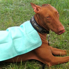 Super Cool Products - Pet Towels
